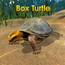 لوگو Box Turtle Simulator