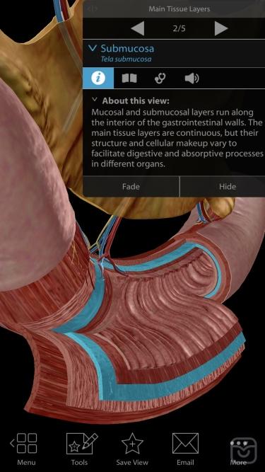 تصاویر Physiology & Pathology