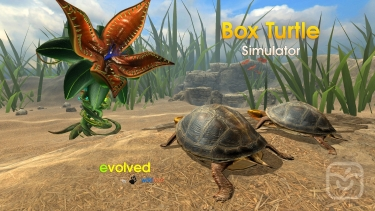 تصاویر Box Turtle Simulator