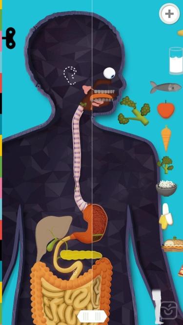 تصاویر The Human Body by Tinybop